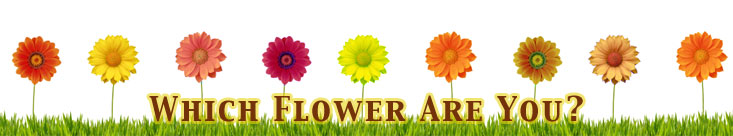 What Flower Are You?