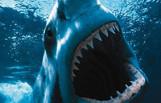 shark_week_prep_featured