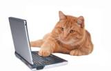 internetcat_featured
