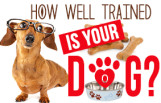 how_well_trained_is_your_dog_featured