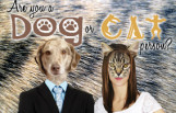 are_you_a_dog_or_cat_person_featured