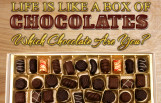 life_is_like_a_box_of_chocolates_which_chocolate_are_you_featured