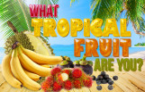 what_tropical_fruit_are_you_featured