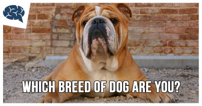 Which breed of dog are you? Which_dog_breed_are_you_bulldog-400x210