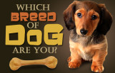 which_dog_breed_are_you_featured