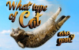 what_type_of_cat_are_you_featured