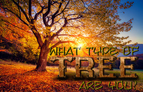 what_type_of_tree_are_you_featured