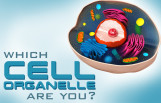 which_cell_organelle_are_you_featured