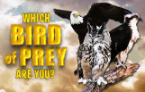 which_bird_of_prey_are_you_featured